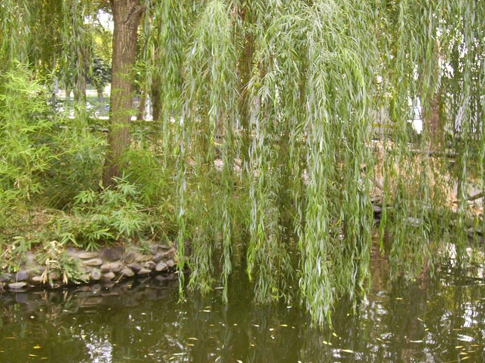 Laghetto dei Giardini Pubblici