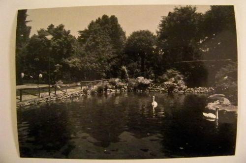 Il laghetto dei giardini pubblici con i cigni.