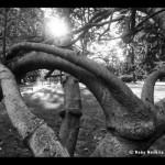 Roby Novello – Lisòndria me amur