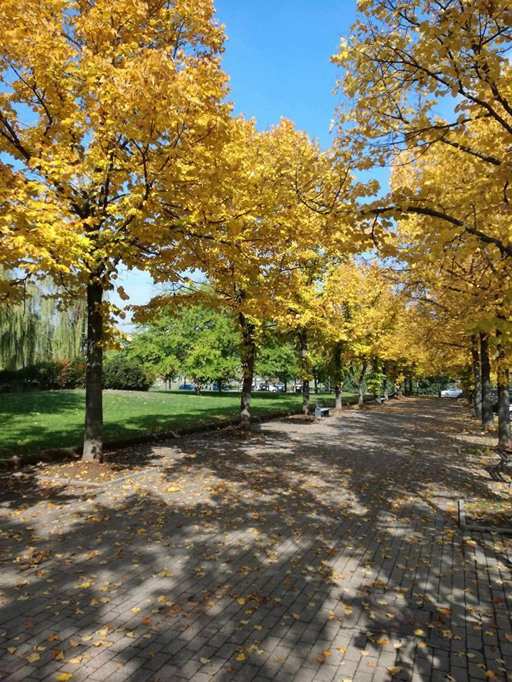 I colori dell'autunno - Parco Carrà - Alessandria (foto Sergio Di)