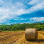 La campagna del Monferrato