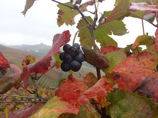 """La campagna nel Monferrato alessandrino """" E le foglie chiacchierine parlano dell'Autunno che ritorna e che sotto la pioggia fine fine di pampini e di bacche agile s'adorna."""" ( A. Moretti )."""