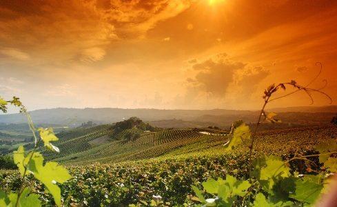 Settembre nel Monferrato alessandrino