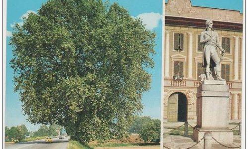 ALESSANDRIA – Platano di Napoleone e Castello di Marengo