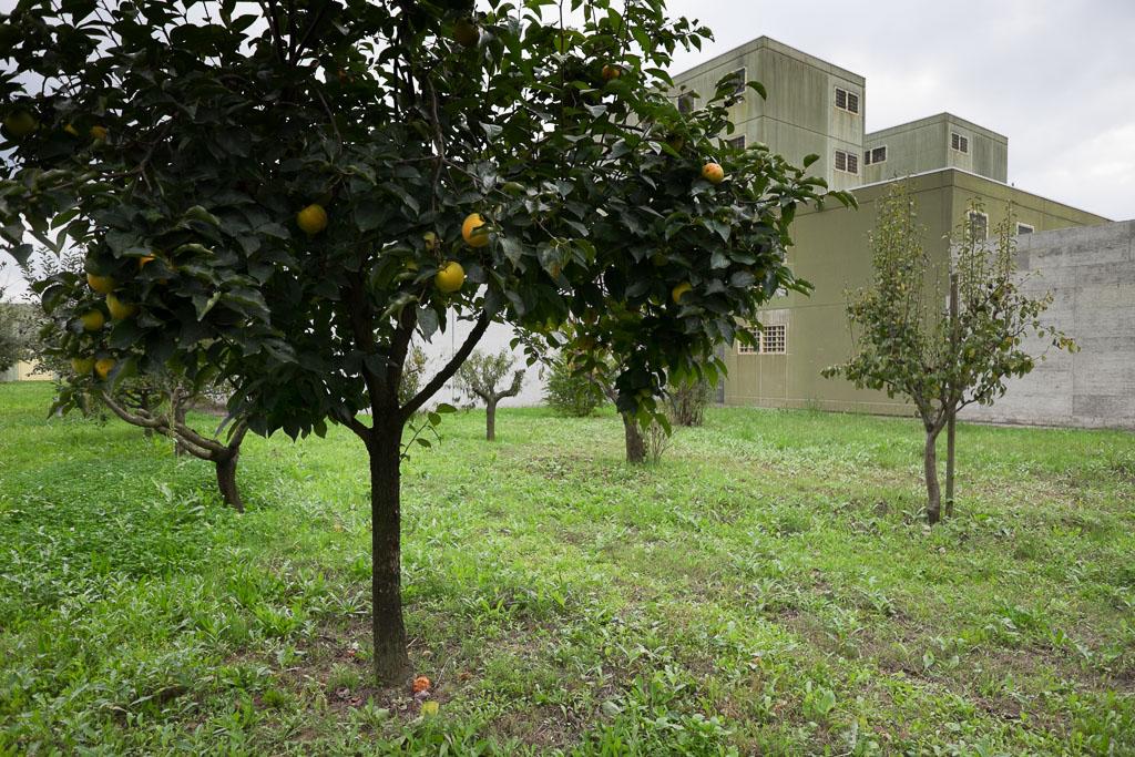 Gli alberi da frutta. Un tempo esisteva una produzione interna all'istituto destinata anche all'esterno. Oggi questa attività è sospesa ma gli alberi continuano a produrre