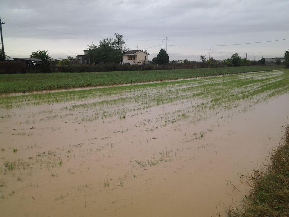 Anche i campi sono allagati a Litta Parodi