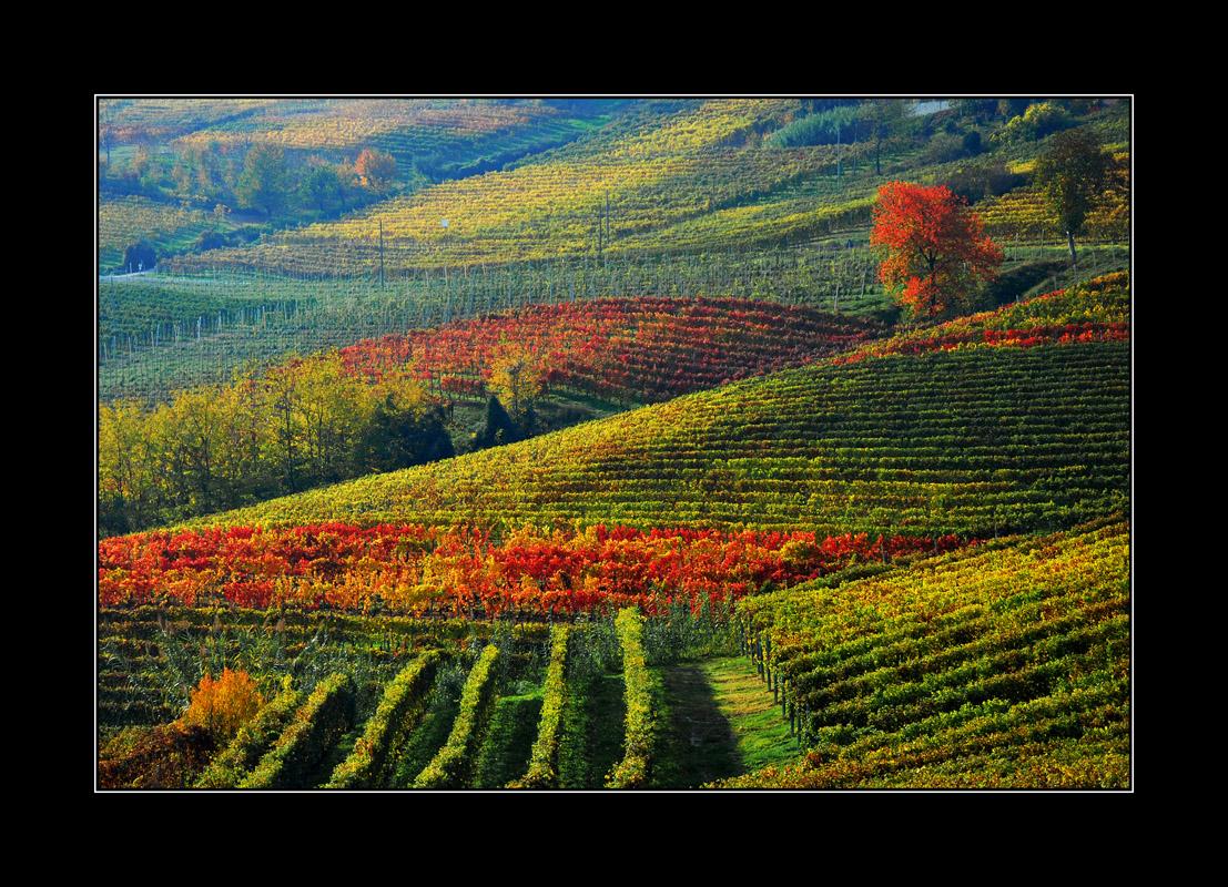 Nella foto: la campagna del Monferrato