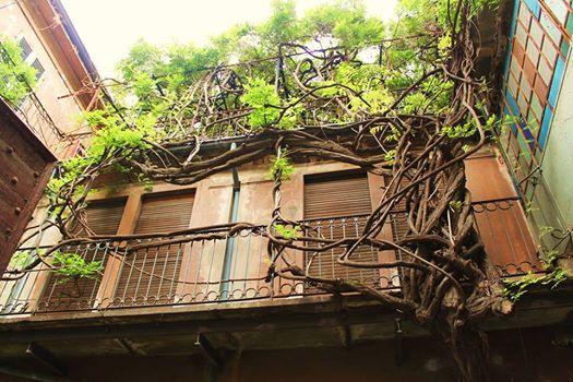 Questa è probabilmente una delle case con più fascino ad Alessandria Questo glicine centenario, rende mirabile l'affaccio in via Bergamo di questa dimora assolutamente fuori dall'ordinario. Vederla un emozione... Viverci un sogno.