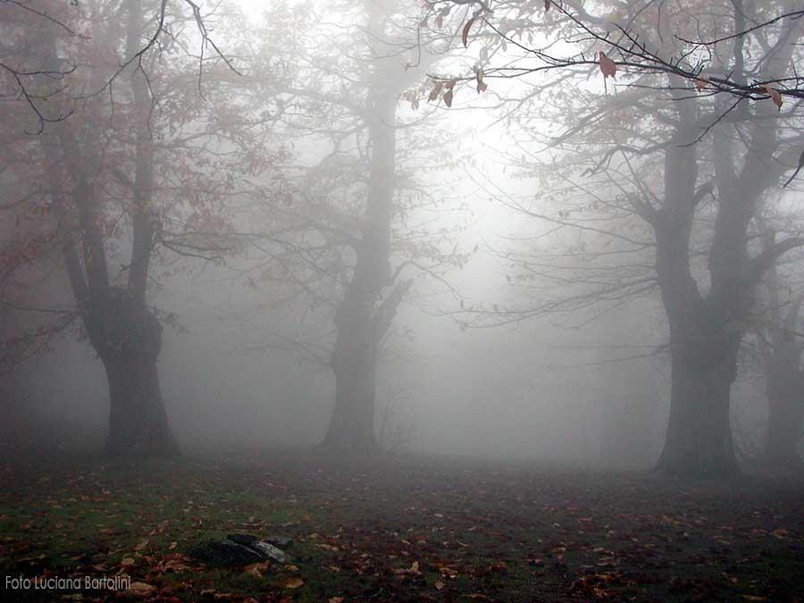 """LA NEBBIA """"Strano camminare nella nebbia ! Solinga ogni pianta, ogni pietra, di tutti questi alberi, l'uno l'altro non vede. Solo è ognuno."""" (H. Hesse ) Questa poesia, insieme all'immagine dei nostri giardini rappresenta benissimo la sensazione di chi cammina nella nebbia...il senso quasi di smarrimento che si percepisce....."""