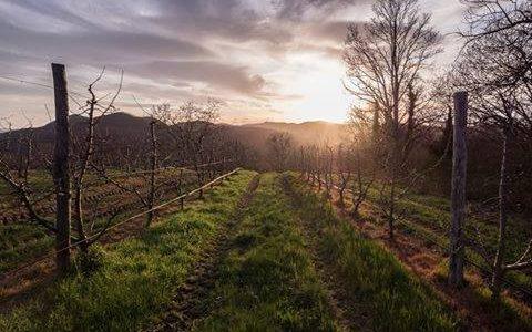 Colline del Monferrato al tramonto
