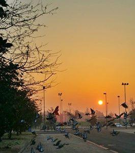 Alessandria Sunrise