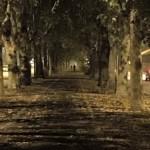Dolci rimembranze notturne dei cari e suggestivi viali della circonvallazione di Alessandria — presso Spalto Gamondio. (foto Mauro Cappelletti)