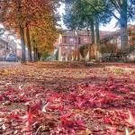 I colori dell'autunno – Alessandria (2015)