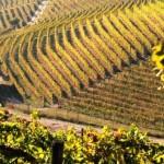 10/11/2015 – Primavera a novembre, oggi il picco in Piemonte. Il record del caldo (27 gradi) nell'Alessandrino