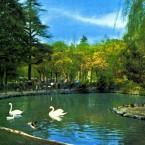 Il laghetto dei giardini pubblici