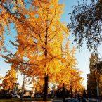 Alessandria – colori autunnali