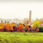 Alessandria, i colori dell'Autunno nei dintorni di Cascina Mezzano.