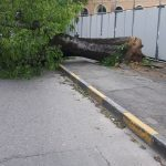 18/04/2017 Via Casalbagliano (quartiere Cristo) forti raffiche di vento hanno sradicato un albero davanti alla scuola Zanzi.
